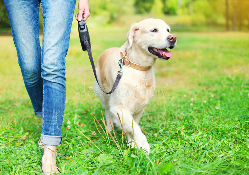 Ägaren som går med golden retrieverhunden parkerar in royaltyfria bilder
