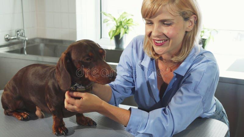 Ägaren talar till hunden royaltyfri bild