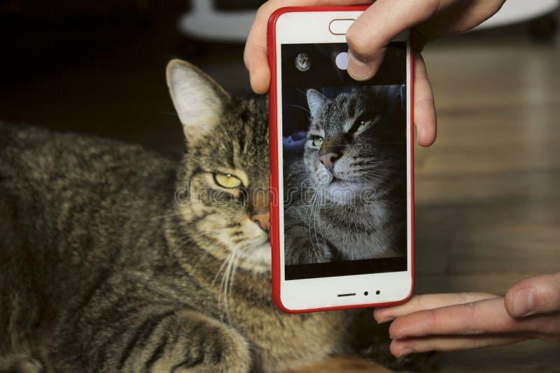 Ägaren tar ett foto av husdjuret, stänger sig upp Kantjusterat skott av en katt royaltyfria foton