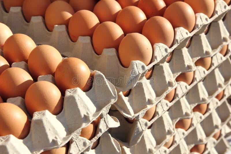 ägg arkivfoto