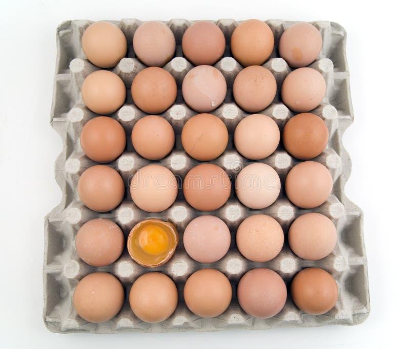 ägg alldeles royaltyfri fotografi