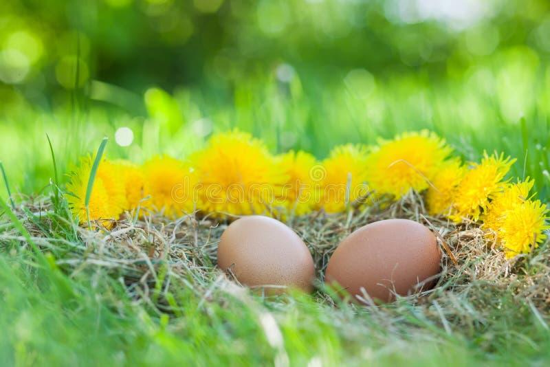 Ägg av höna fotografering för bildbyråer