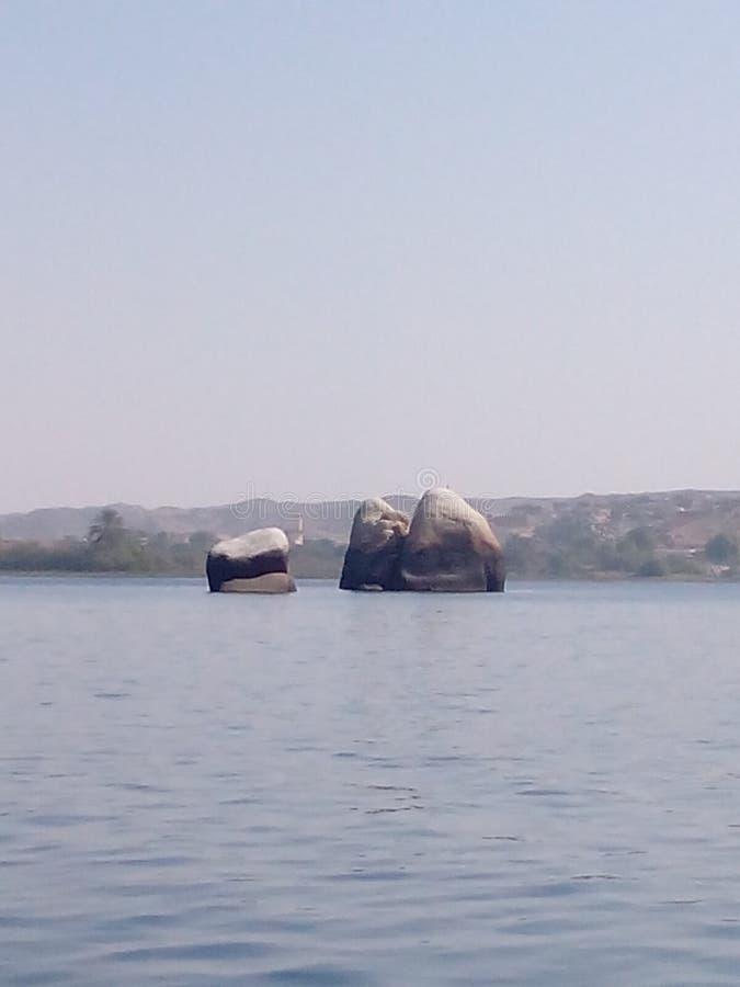 Ägg av Nilen arkivfoto
