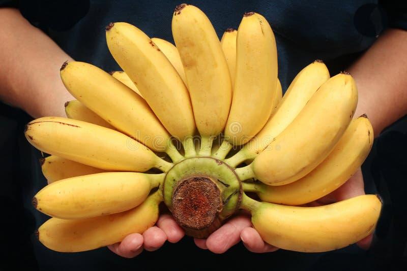 Ägg-bananen eller Pisang mas är berömd frukt av Thailand arkivbild