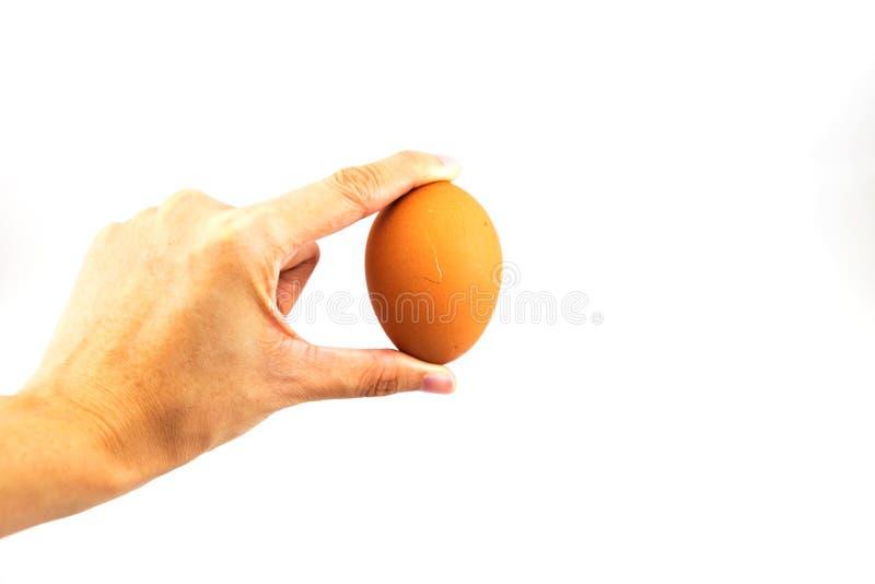 Ägg för hand för kvinna` s hållande royaltyfria foton