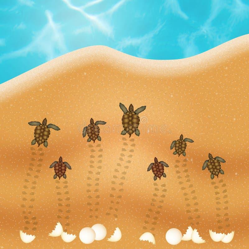 Ägg för havssköldpadda på stranden vektor illustrationer