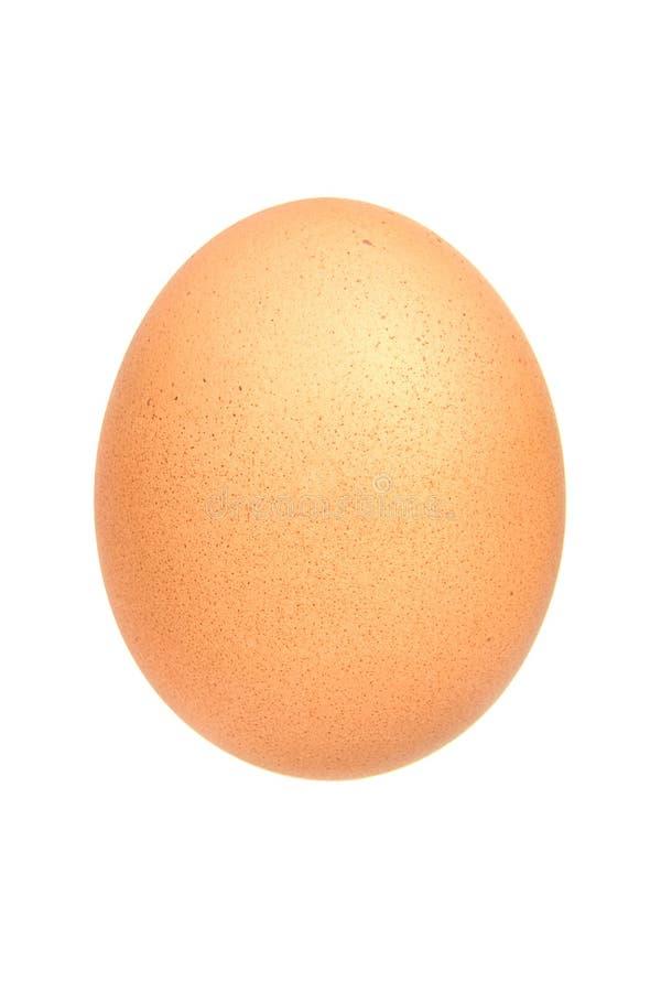 Ägg för singelbrunthöna som isoleras på vit bakgrund arkivfoto