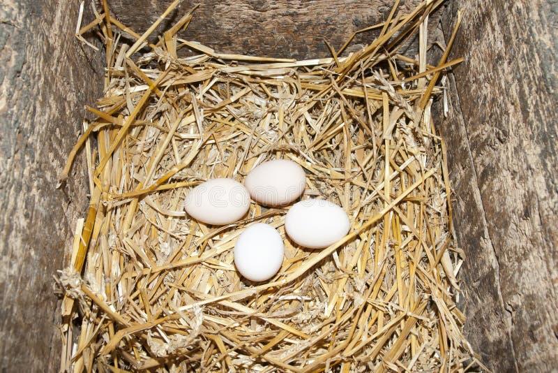 ägg frigör område arkivbilder