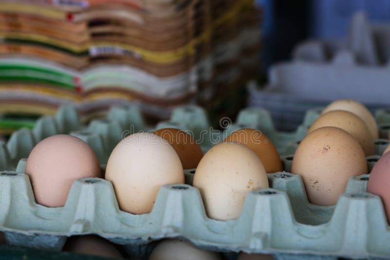 Ägg i ägglåda, organiska ägg, massproduktion royaltyfria bilder