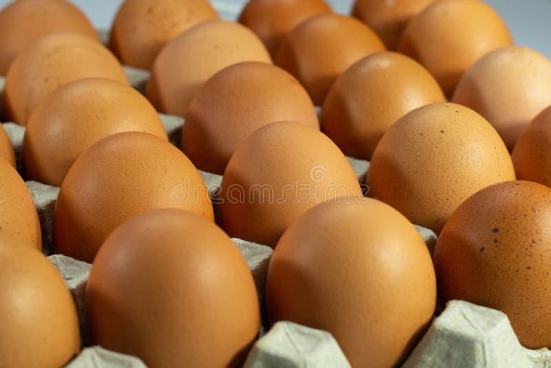 Ägg, i att förpacka för lådaask royaltyfri foto