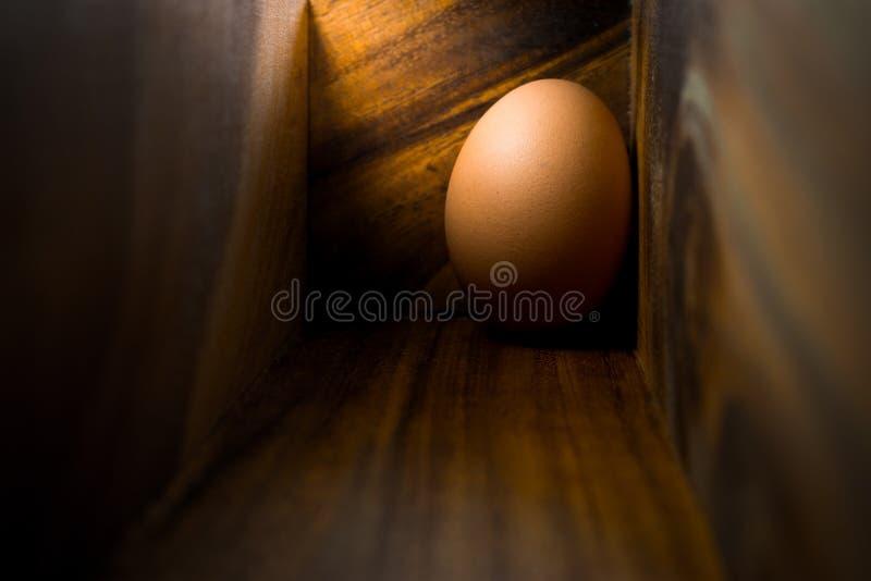Ägg i den wood asken arkivbild