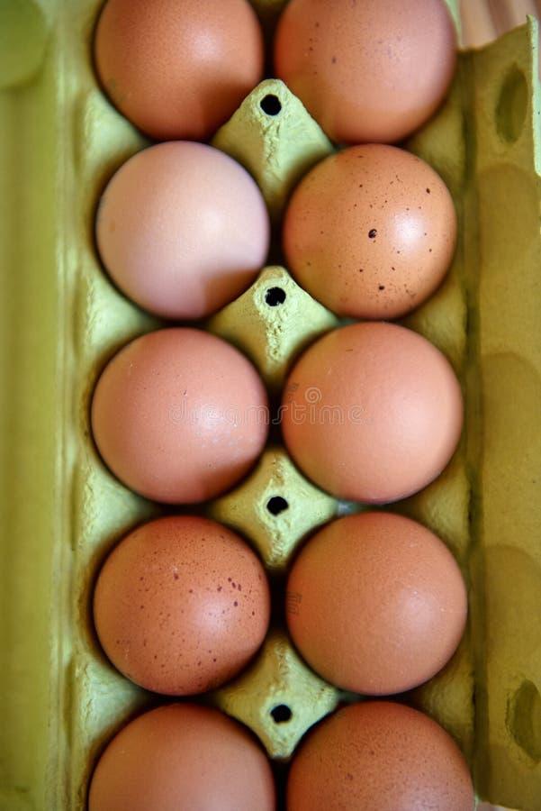 Ägg i emballage fotografering för bildbyråer