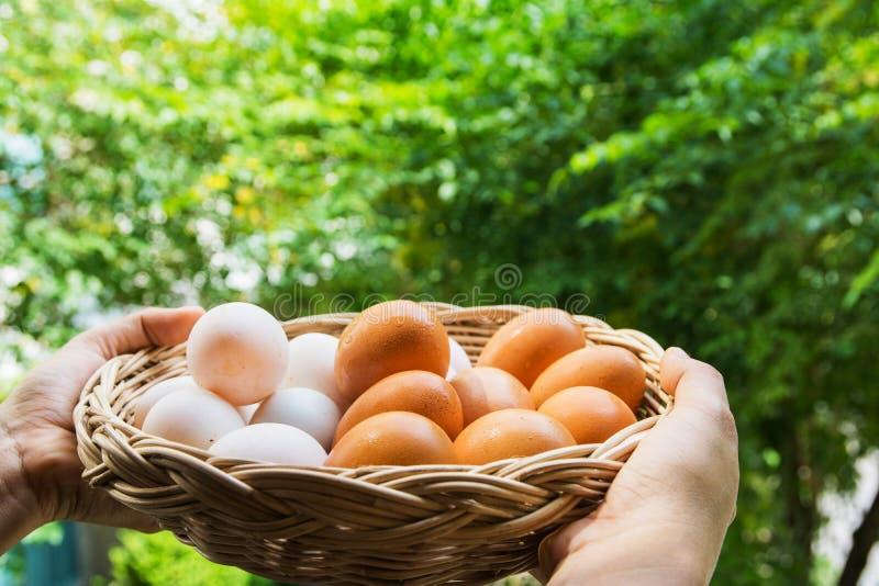 Ägg i en korg royaltyfri fotografi