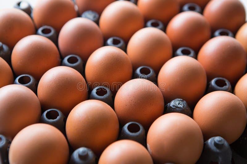 Ägg i en plast- panel arkivbild