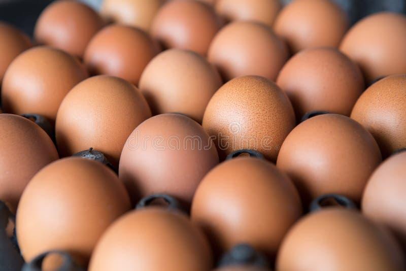 Ägg i en plast- panel arkivbilder