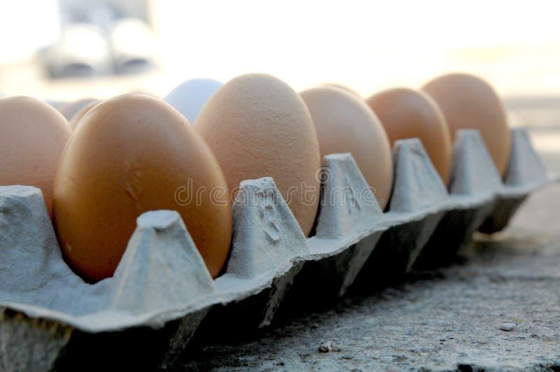 Ägg i en rad royaltyfria bilder