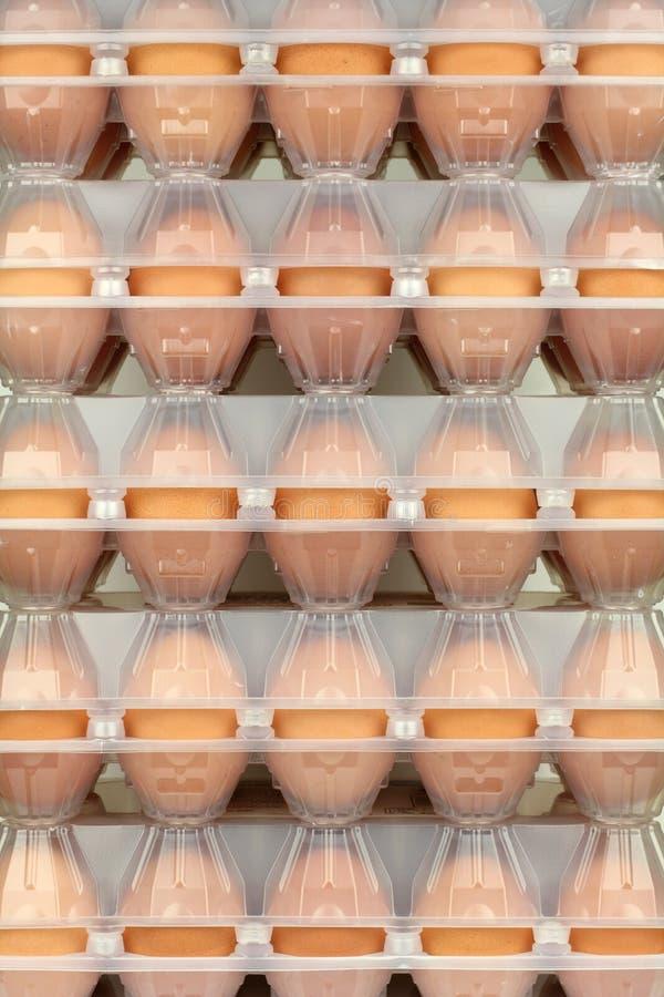 Ägg i lådor fotografering för bildbyråer