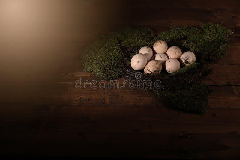 Ägg i mossan arkivbilder