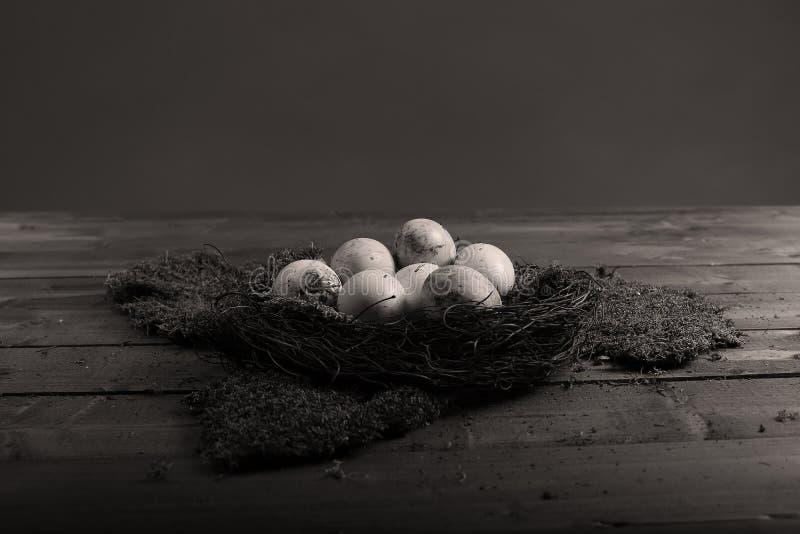 Ägg i mossan arkivfoto