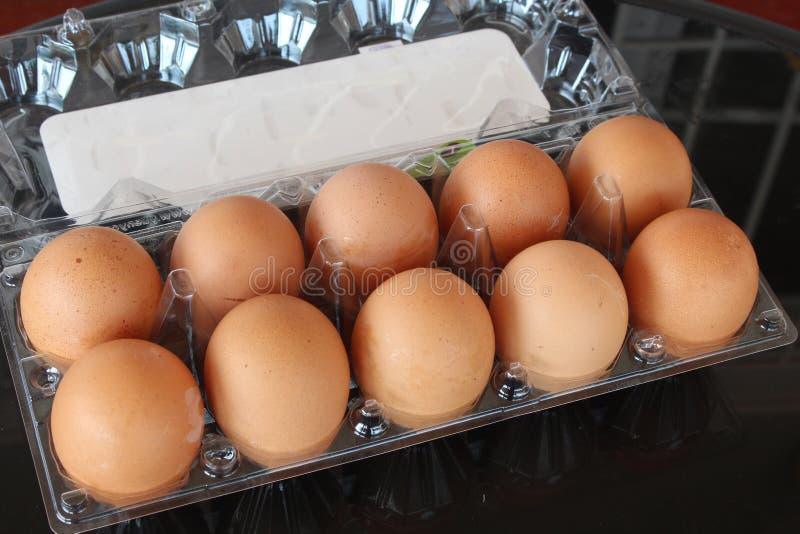 Ägg i packen royaltyfria foton