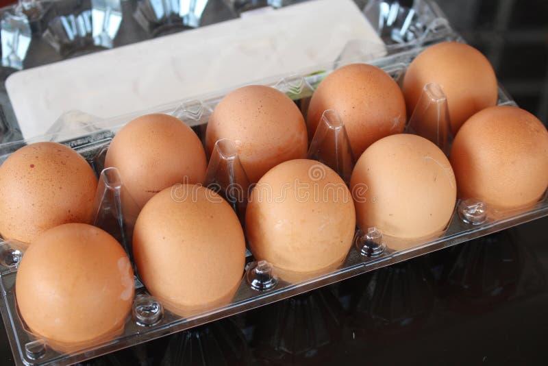 Ägg i packen royaltyfria bilder