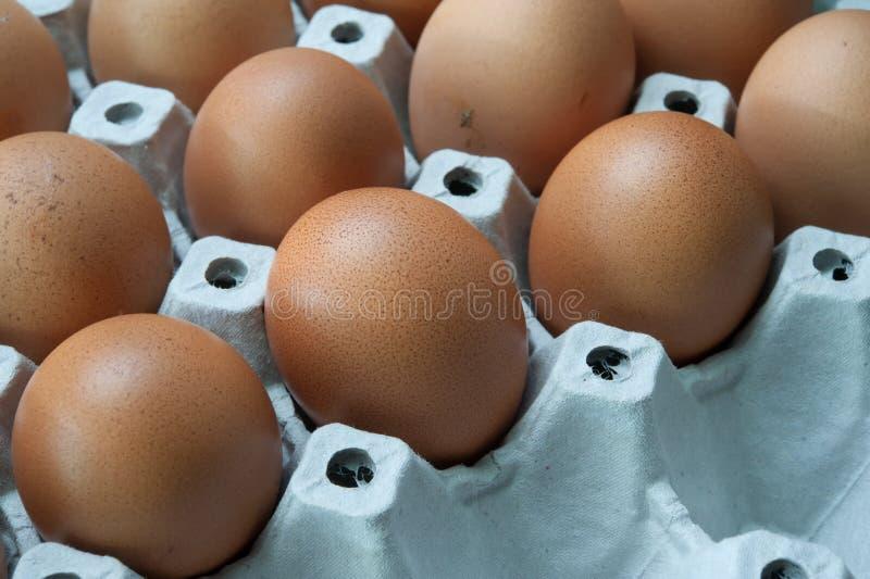 Ägg i panel fotografering för bildbyråer