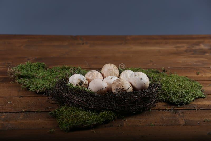 Ägg i redet arkivbild