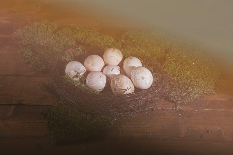 Ägg i redet royaltyfria foton