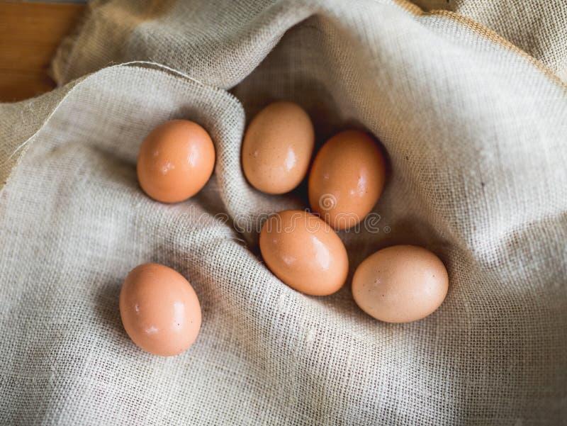 Ägg i säck royaltyfri bild