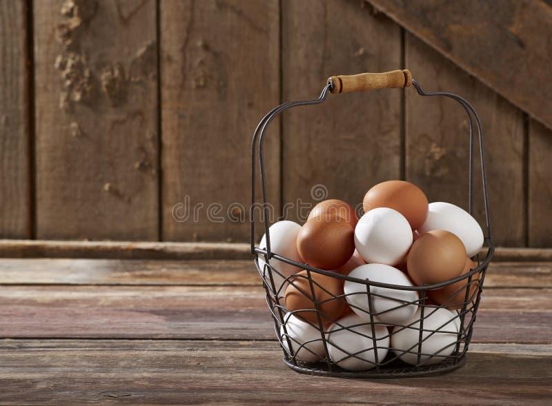 Ägg i trådkorg royaltyfria bilder