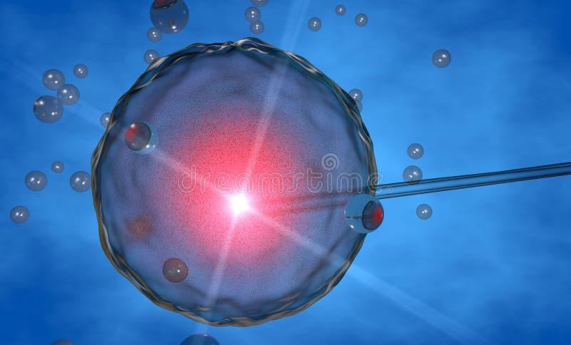 Ägg insemination som är konstgjord royaltyfri illustrationer