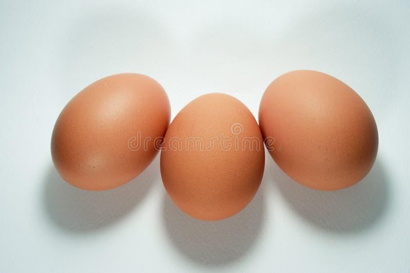 Ägg ägg, mat, brunt som är sund royaltyfria foton