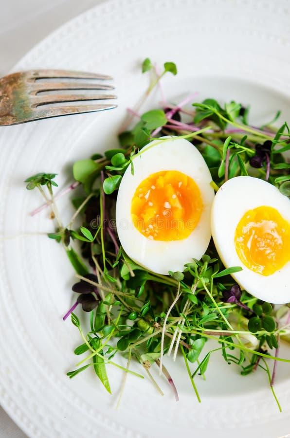 Ägg med groddar på plattan arkivbild