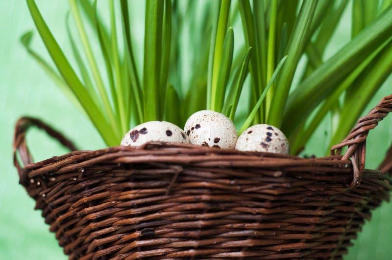 Ägg med växter i korg royaltyfria bilder