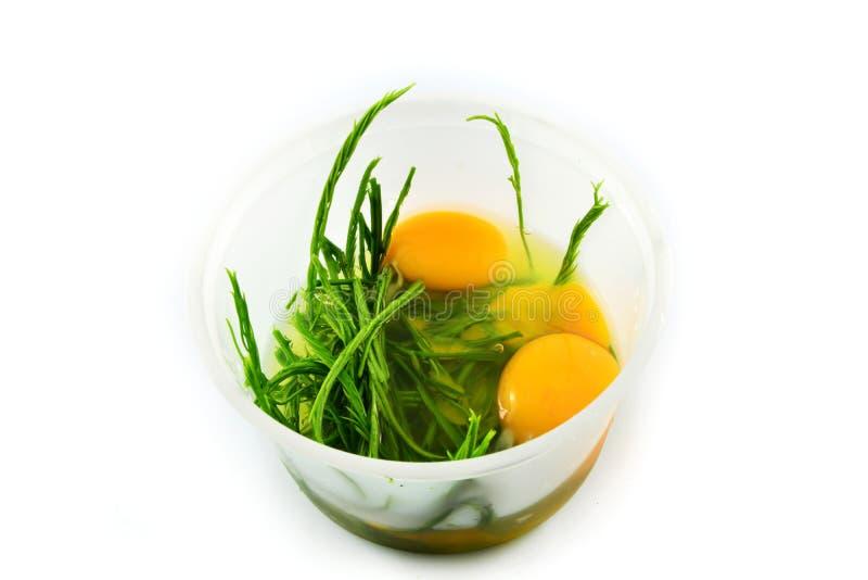Ägg- och akaciapennata arkivbilder