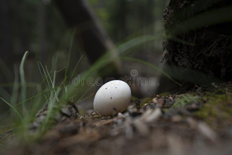 Ägg på en fotvandra slinga arkivbilder