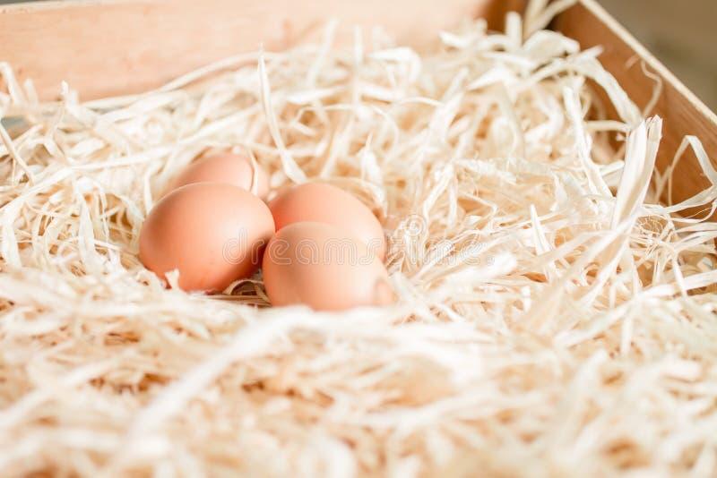 Ägg på sugrör fotografering för bildbyråer