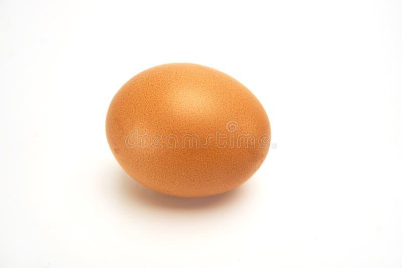 Ägg på vitbakgrund arkivfoto