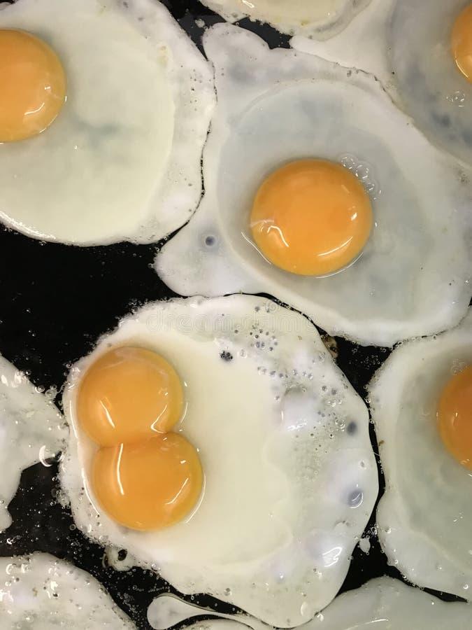 Ägget kopplar samman royaltyfria foton