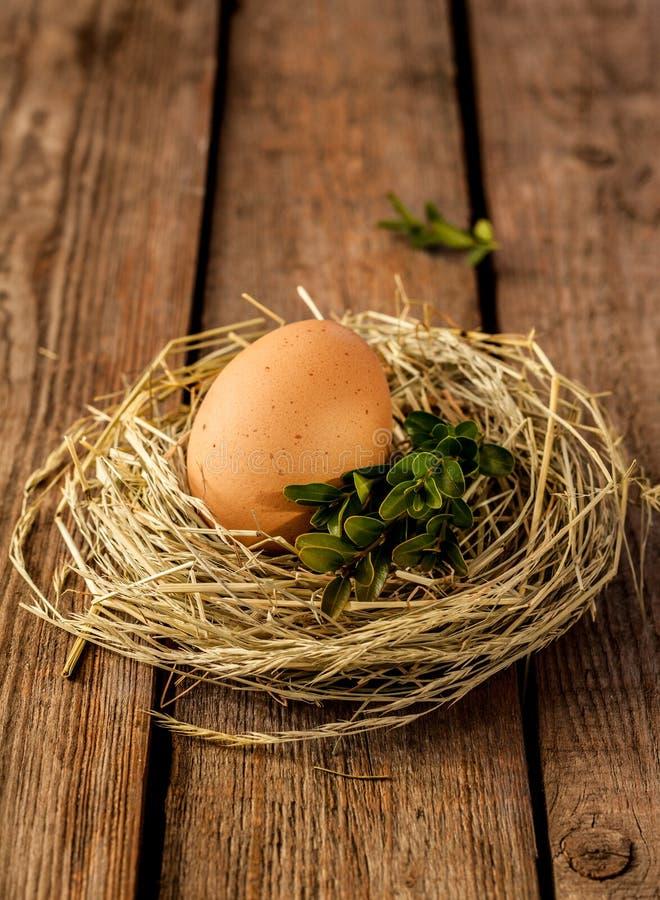 Ägget och buxusen i ett hö bygga bo på lantligt trä arkivbild