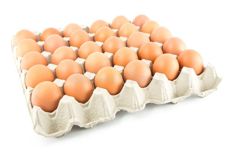 ägggrupp arkivbild