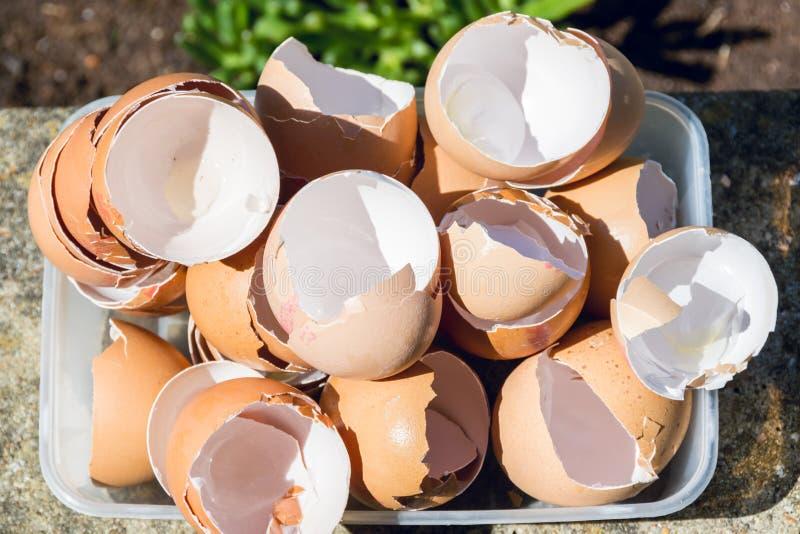 Äggskal i en plast- behållare 2 arkivbild