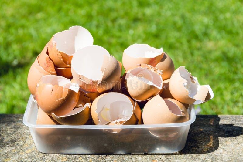 Äggskal i en plast- behållare 1 fotografering för bildbyråer