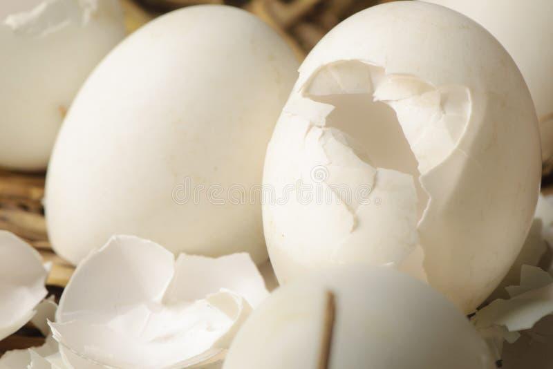 Äggskal i ett rede av hö royaltyfria foton