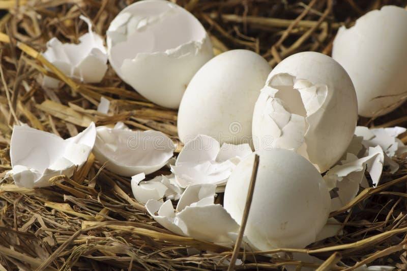 Äggskal i ett rede av hö arkivbild