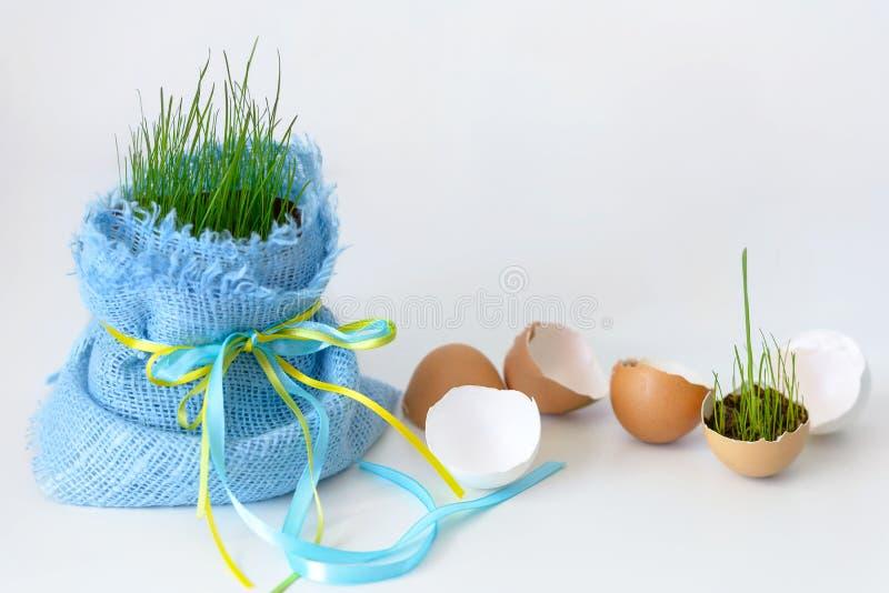 Äggskal och barngräs med kopieringsutrymme fotografering för bildbyråer