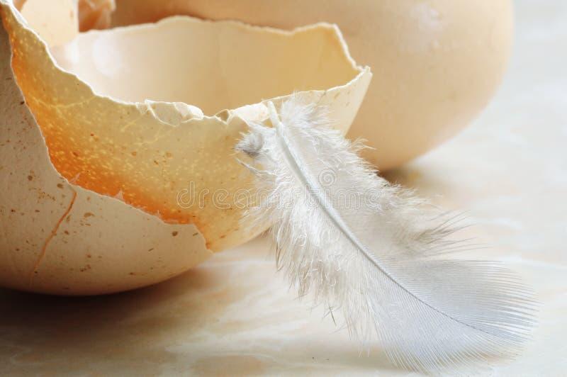 Äggskal och hönsfjäder arkivfoton