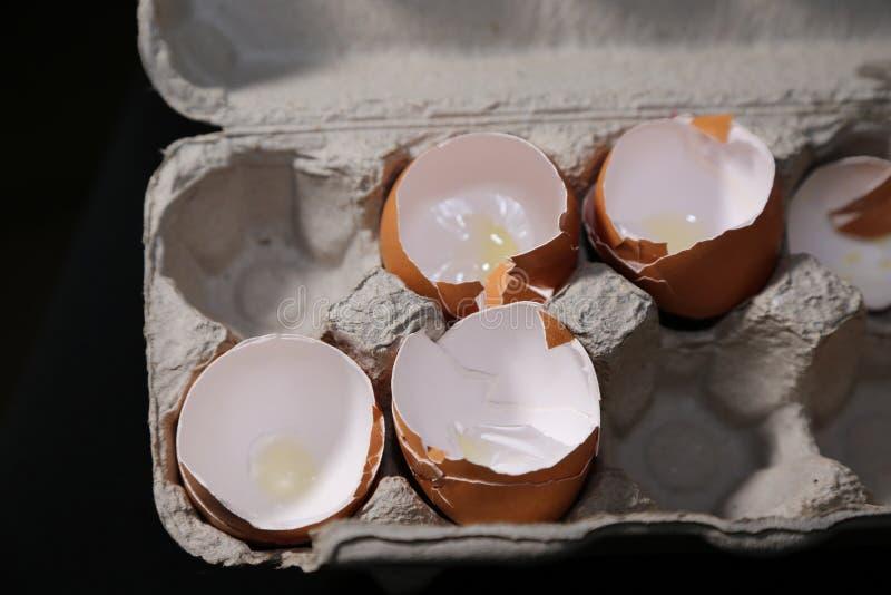 Äggskal och spänning, eller äggskal och mat! royaltyfri foto
