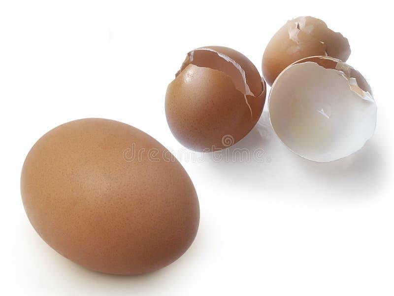 Äggskal på en vit bakgrund royaltyfri bild