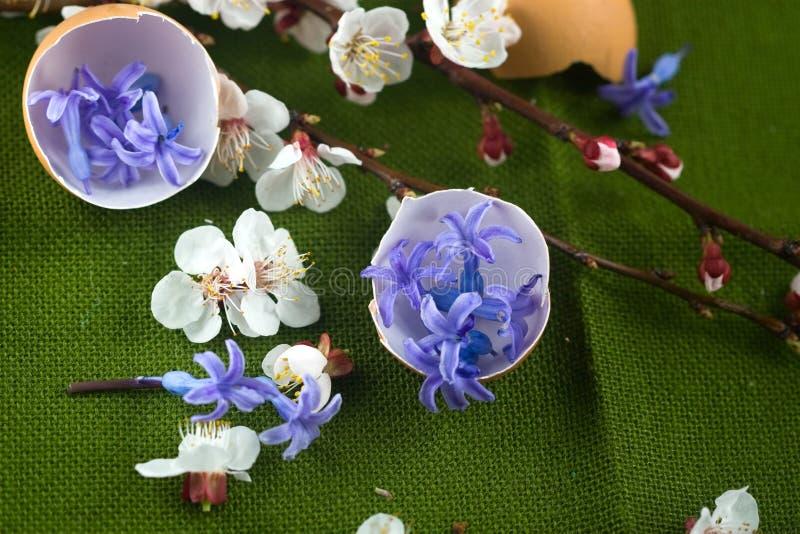 Äggskal som fylls med blåa blommor royaltyfria bilder